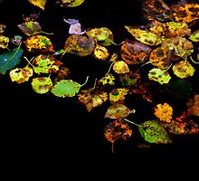 Autumn leaves in water by GryThunes