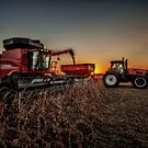Bean Harvest at Sunset by Steve Baird