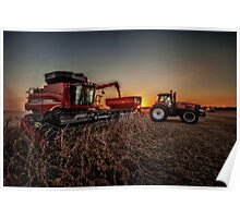 Bean Harvest at Sunset Poster