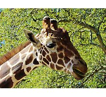 Giraffe Headshot Photographic Print