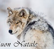 Timber Wolf Christmas Card - Italian - 19 by WolvesOnly
