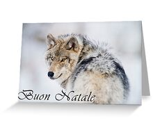 Timber Wolf Christmas Card - Italian - 19 Greeting Card