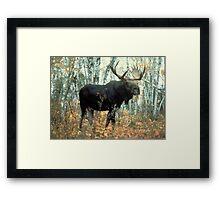 Huge Moose  Framed Print