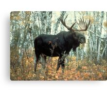 Huge Moose  Canvas Print