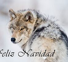 Timber Wolf Christmas Card - Spanish - 19 by WolvesOnly