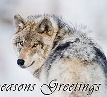 Timber Wolf Seasons Card - 19 by WolvesOnly