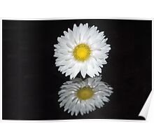 Reflections - White Everlasting Flower Poster
