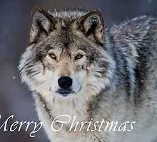 Timber Wolf Christmas Card - English - 20 by WolvesOnly
