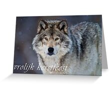 Timber Wolf Christmas Card - Dutch - 20 Greeting Card