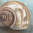The shell by fladelita