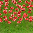Poppies 2 by Veterisflamme