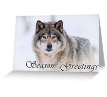 Timber Wolf Seasons Card - 21 Greeting Card