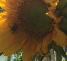 Bumblebee on Sunflower Sticker