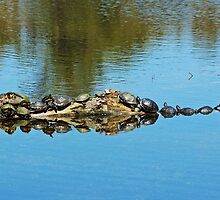 Family Of Turtles by Cynthia48