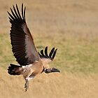 Low Pass!! by Macky