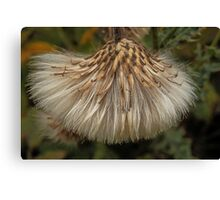 Nature's own sweep brush Canvas Print