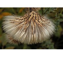 Nature's own sweep brush Photographic Print