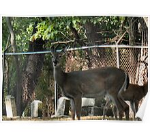 """""""Oh, Deer!""""...prints and products Poster"""