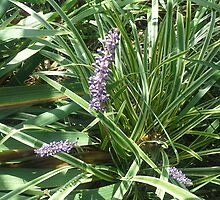 blooming variegated grass with purple flower by ItsAnOddWorld
