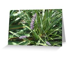 blooming variegated grass with purple flower Greeting Card