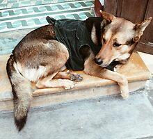 Vietnam Dog by karlmagee