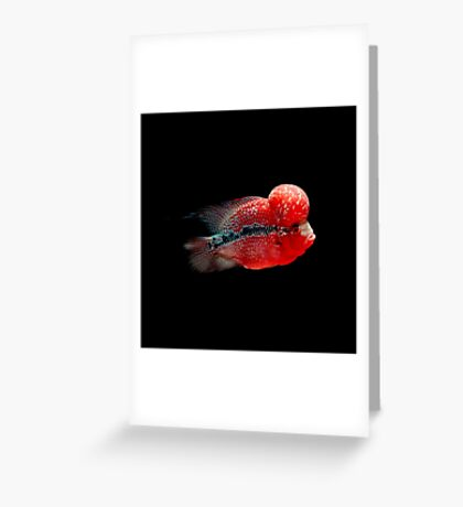 Luohan Flower horn Fish Greeting Card