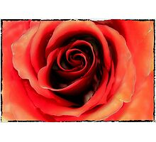 red rose lake Photographic Print