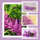 Photo Collage # 2 - Astilbe Etc by Sandra Foster