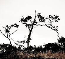 Lonely tree by TJLewisPhoto