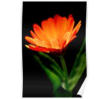red flower on black background Poster