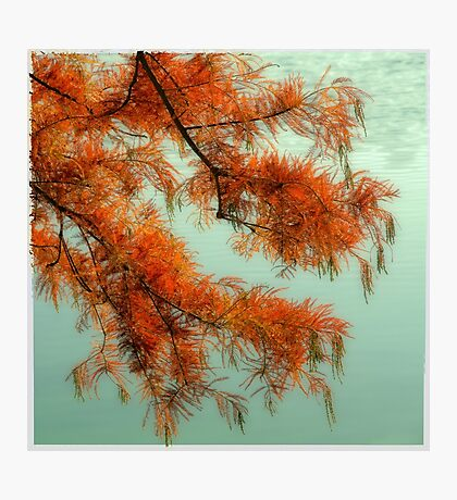 dreamlike red tree Photographic Print