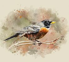 American Robin Watercolor Art by Christina Rollo