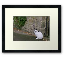 Riverside Cat Framed Print