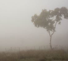 Misty Gum by Candice84