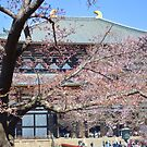 Todaiji Temple with Sakura by Summer Iscoming