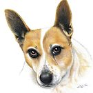 Colour Pencil Portrait of our dog Skippy by Karen Sagovac