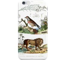 The Lion and Bird iPhone Case/Skin