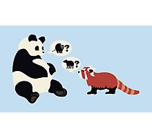 Questioning Pandas Photographic Print