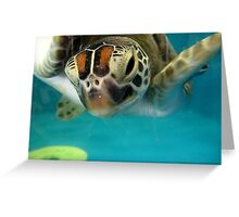Green Turtle Greeting Greeting Card