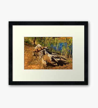 Where Are The Giants? Framed Print