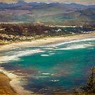 Manzanita by Steve Walser