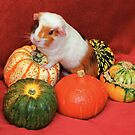 Cupcake in the Pumpkins by AnnDixon