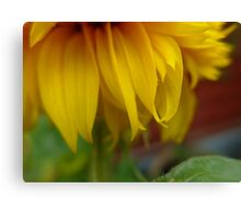 Fairy soft and golden Canvas Print
