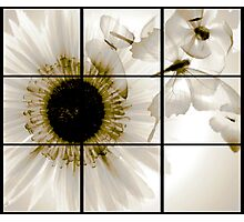 transparent flower in  grey Photographic Print