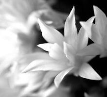 Soft Constrast by nanuen