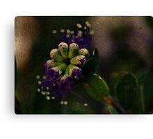 Purple Bud Canvas Print