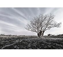Silver Boab Photographic Print
