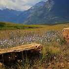 Mountains, Fields of Flowers and Rock Pieces by Vickie Emms