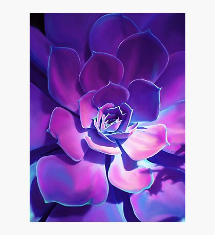 MOONLIGHT SUCCULENT Photographic Print
