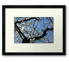 Blooming Tree Sunlight Framed Print